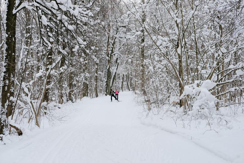 Bosque congelado imagenes de archivo