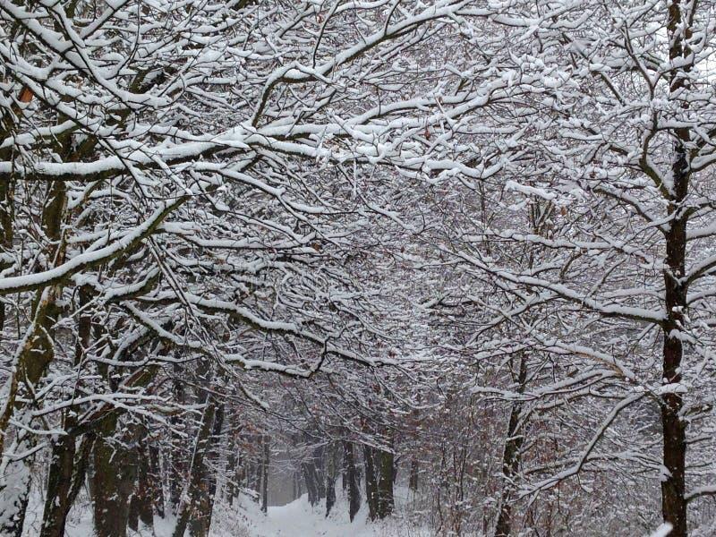 Bosque congelado foto de archivo libre de regalías