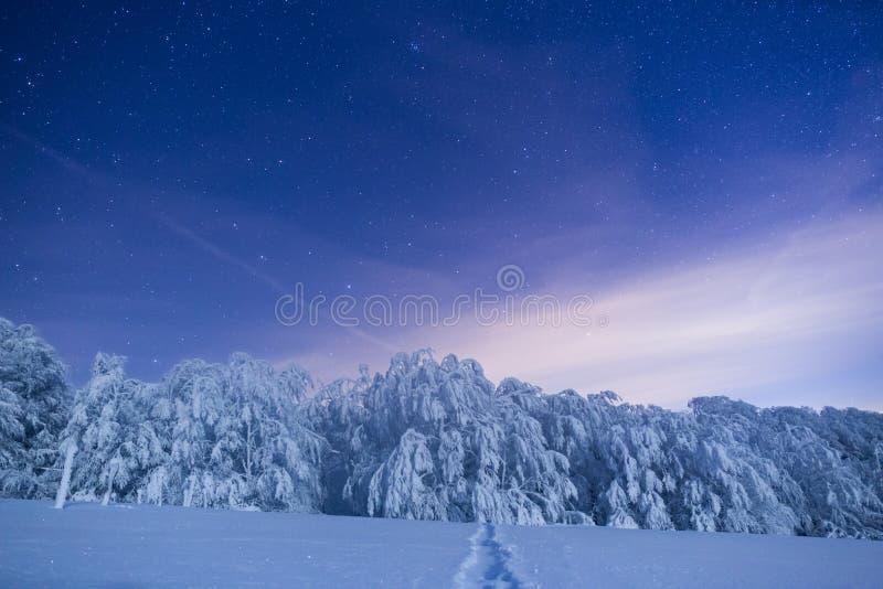 Bosque congelado debajo de un cielo llenado de las estrellas imágenes de archivo libres de regalías
