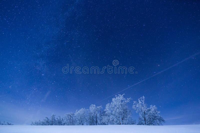 Bosque congelado debajo de un cielo llenado de las estrellas imagenes de archivo