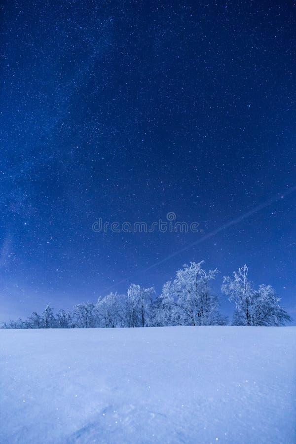 Bosque congelado debajo de un cielo llenado de las estrellas foto de archivo libre de regalías
