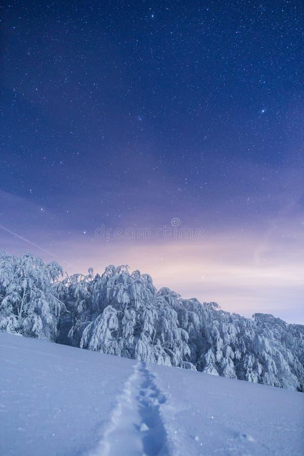 Bosque congelado debajo de un cielo llenado de las estrellas fotos de archivo libres de regalías