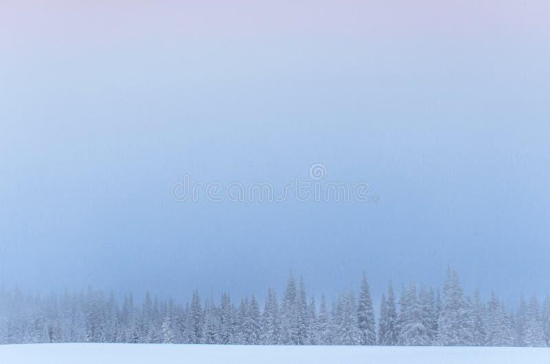 Bosque congelado del invierno en la niebla Árbol de pino en la naturaleza cubierta con la nieve fresca cárpata, Ucrania fotografía de archivo libre de regalías
