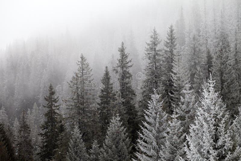 Bosque congelado del invierno en la niebla foto de archivo libre de regalías