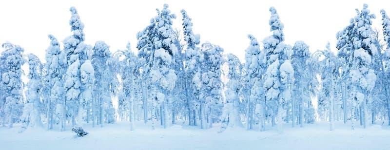 Bosque congelado Nevado - fondo de la frontera del invierno fotos de archivo libres de regalías