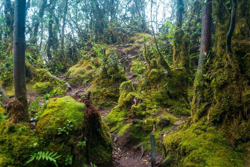 Bosque cubierto de musgo en Cameron Highlands fotografía de archivo