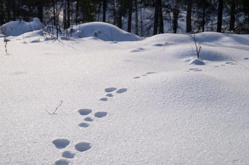 Bosque cubierto en nieve y huella fresca fotografía de archivo libre de regalías