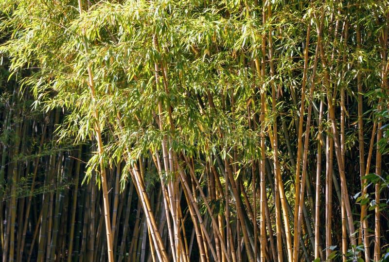 Download Árvore de bambu imagem de stock. Imagem de parque, bosque - 29844103