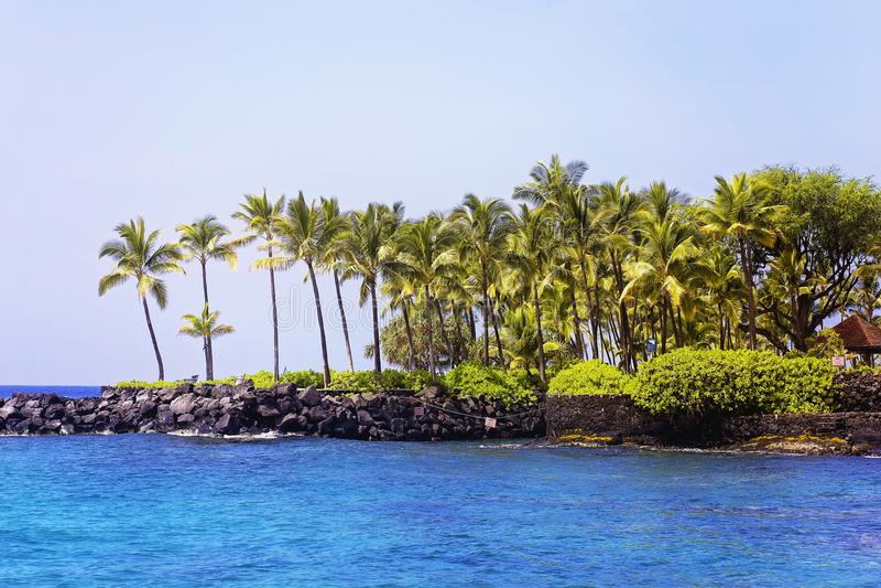 Bosque da palma de coco em Havaí na baía de Kona imagem de stock royalty free
