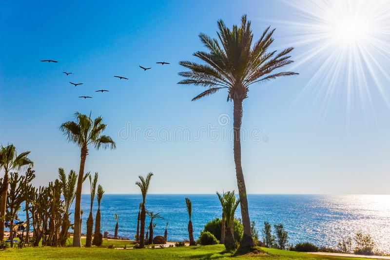 Bosque da palma na costa foto de stock royalty free