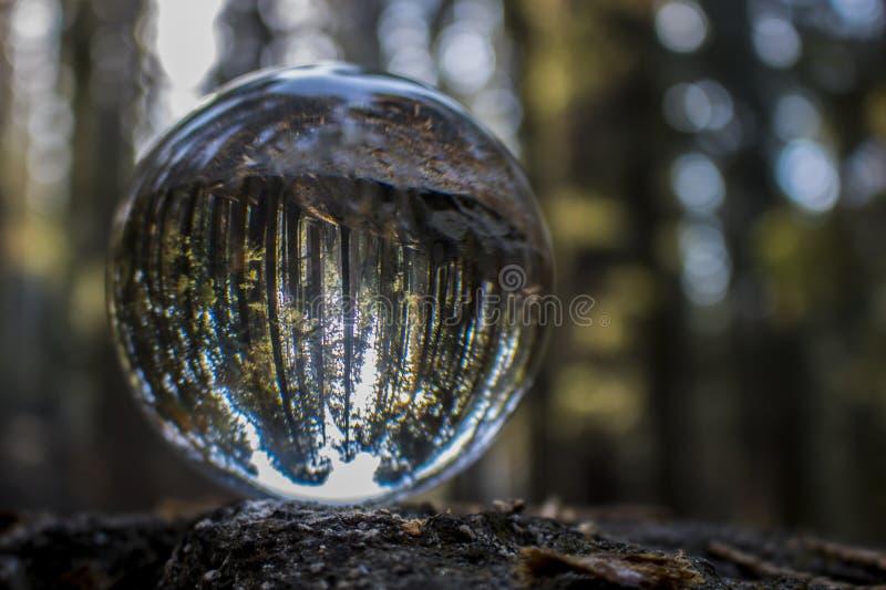 Bosque de árvores da sequoia vermelha da sequoia gigante na reflexão da bola de vidro imagem de stock royalty free