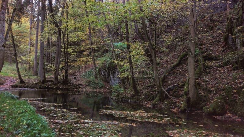 Bosque de almas perdidas fotos de archivo