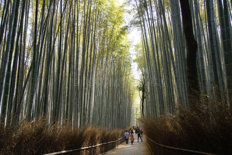 Bosque de Arashiyama Bambou imagen de archivo libre de regalías