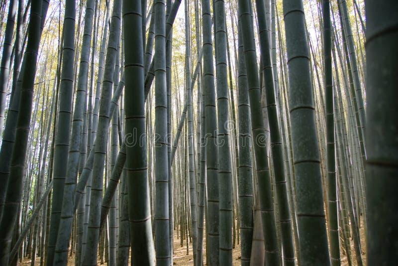 Bosque de Arashiyama Bambou foto de archivo libre de regalías