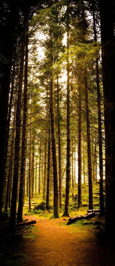 Bosque de Ard del lago imagenes de archivo