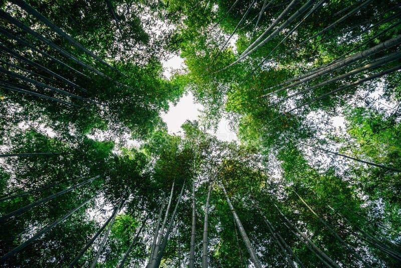Bosque de bambú de Arashiyama en Japón imagen de archivo libre de regalías