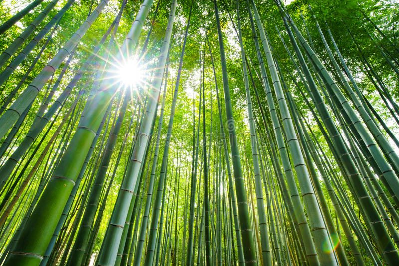 Bosque de bambú, Arashiyama, Kyoto, Japón foto de archivo