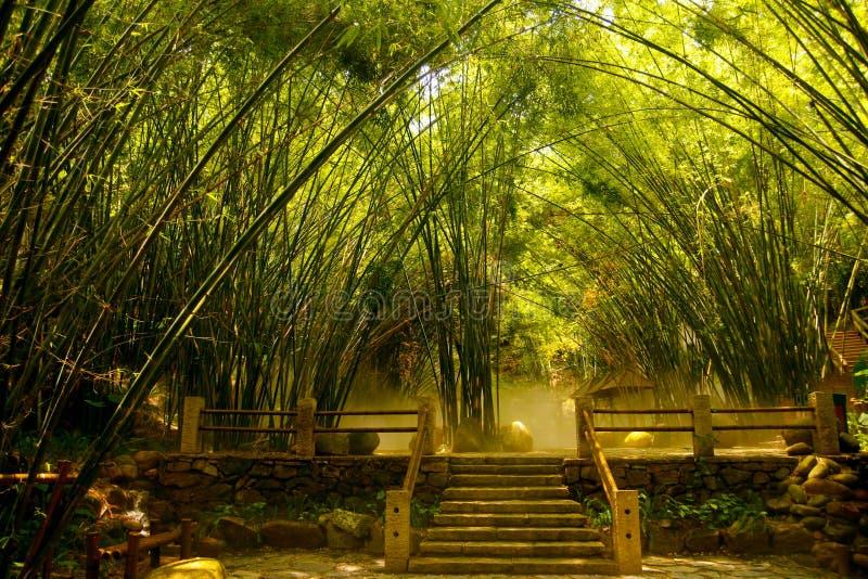 Bosque de bambú asiático fotografía de archivo