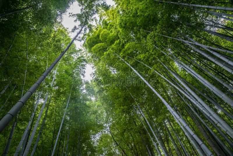 Bosque de bambú del parque Kyoto Japón de Arashiyama foto de archivo libre de regalías