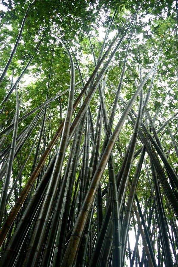 Bosque de bambú después de la lluvia fotografía de archivo libre de regalías