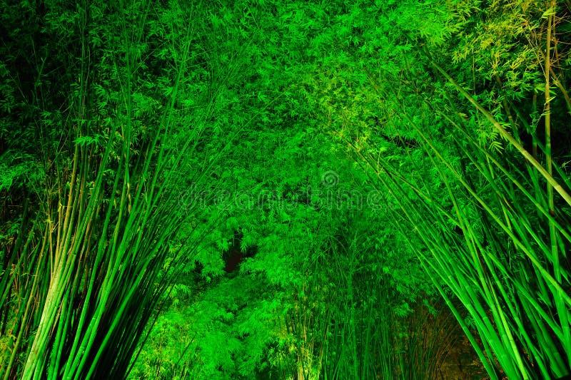 Bosque de bambú en la noche imagen de archivo libre de regalías