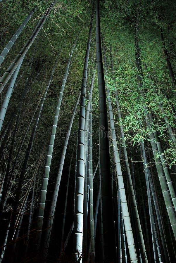 Bosque de bambú en la noche imagenes de archivo