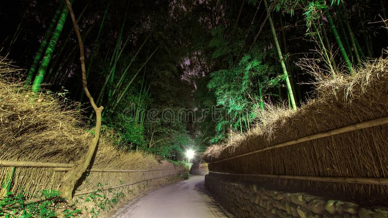 Bosque de bambú de la arboleda en la noche, Arashiyama imagenes de archivo