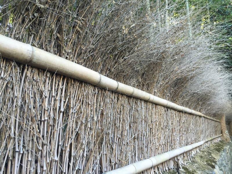 Bosque de bambú a lo largo del lado del país foto de archivo