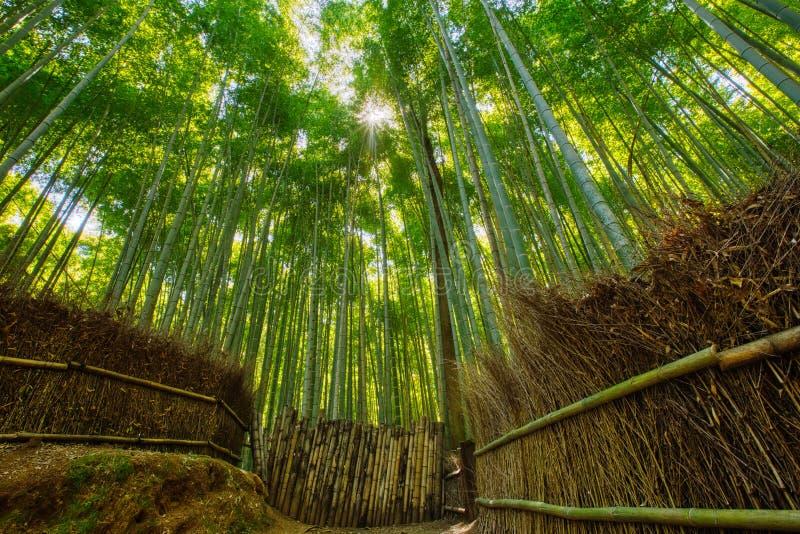 Bosque de bambú y trayectoria que camina en Arashiyama, Kyoto, Japón fotografía de archivo