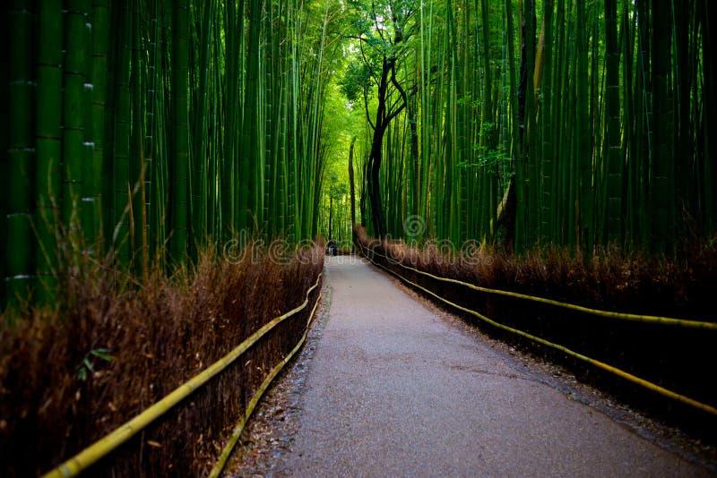 Bosque de bambu fotos de stock