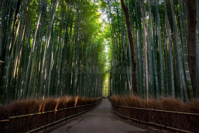 Bosque de bambu de Arashiyama, Kyoto, Japão fotografia de stock