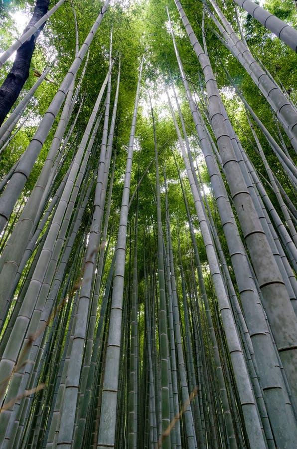 Bosque de bambu famoso em Arashiyama, Kyoto fotos de stock