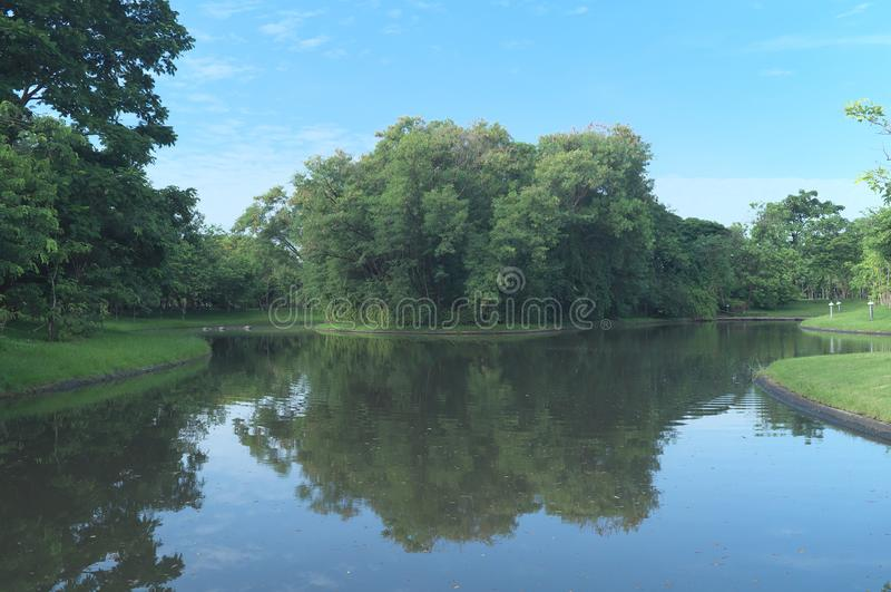 Bosque de bambu na água no parque da rainha Sirikit foto de stock