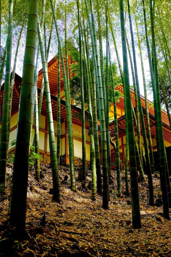 Bosque de bambu no templo de Engakuji foto de stock