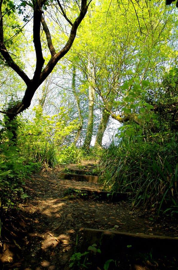 Bosque de Enlighted imagen de archivo libre de regalías