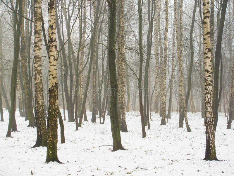 Bosque de fevereiro na névoa e na neve fotografia de stock royalty free