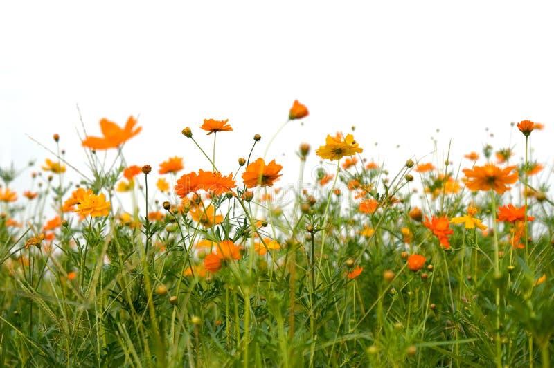 Bosque de flores imagen de archivo