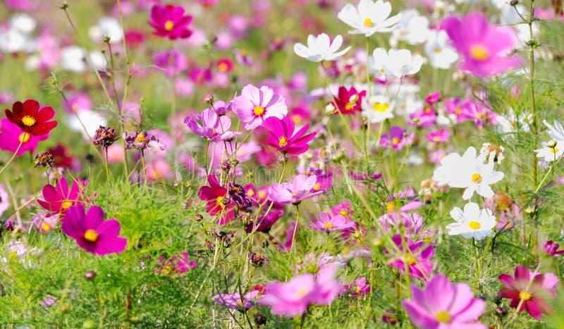 Bosque de flores fotografía de archivo libre de regalías