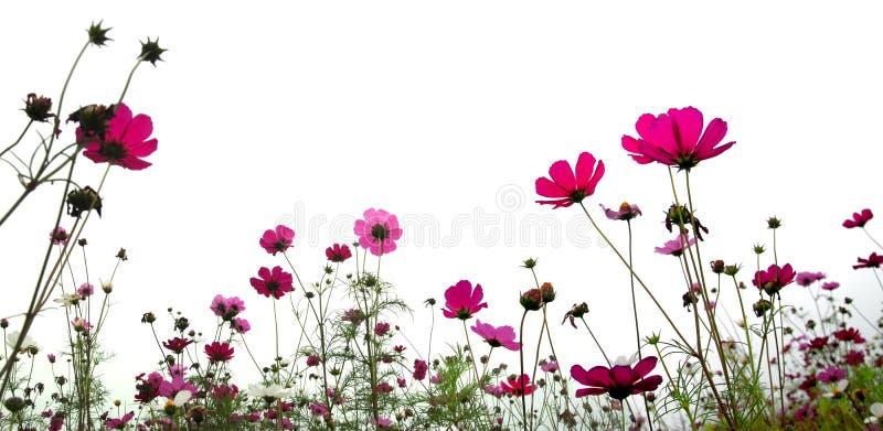 Bosque de flores imagenes de archivo