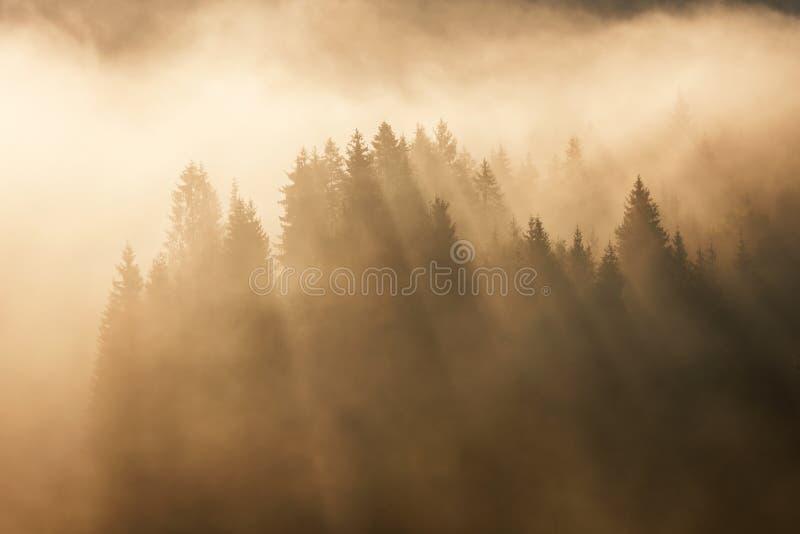 Bosque de Geroldsee durante día del otoño sobre los picos de montaña, bávaros imagen de archivo