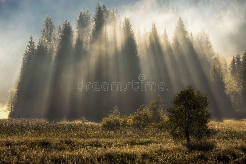 Bosque de Geroldsee durante día del otoño sobre los picos de montaña, bávaros imagenes de archivo