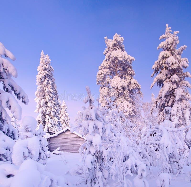 Bosque de hadas de la nieve del invierno con los árboles de pino imagenes de archivo