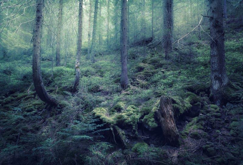 Bosque de hadas de la primavera con niebla verde por la mañana imágenes de archivo libres de regalías