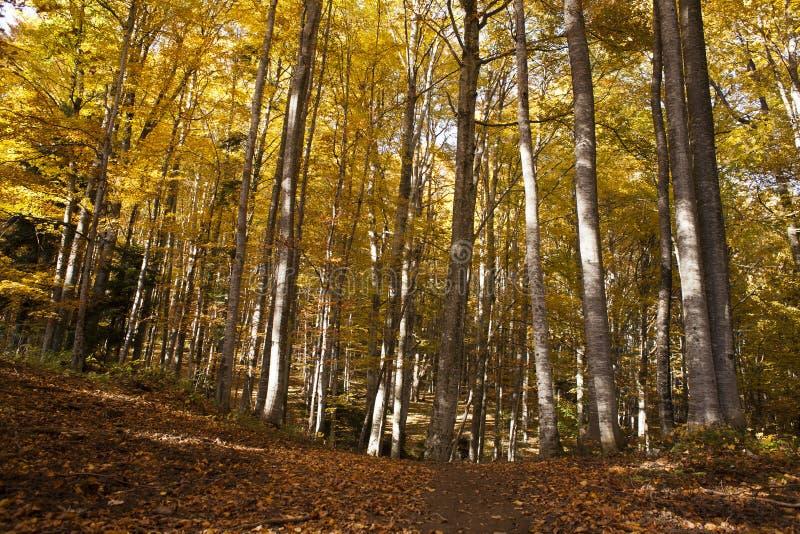 Bosque de hojas caducas fotografía de archivo libre de regalías
