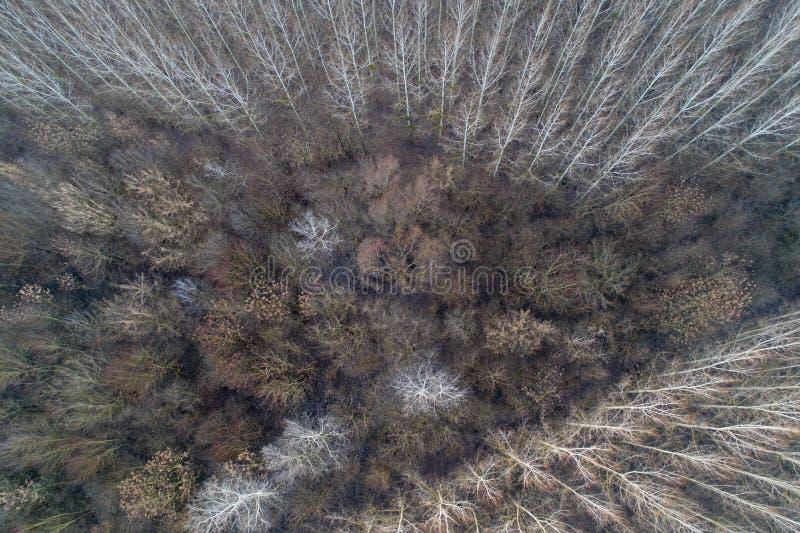 Bosque de hojas caducas del abejón imagenes de archivo