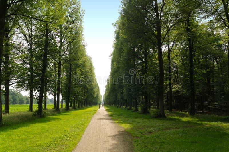 Bosque de hojas caducas del verano con el camino muy recto imágenes de archivo libres de regalías