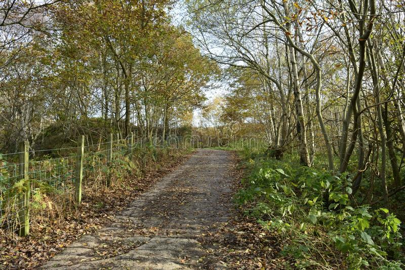 Bosque de hojas caducas en otoño fotos de archivo