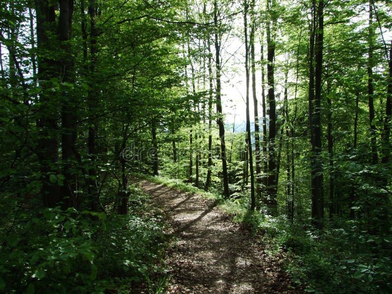 Bosque de hojas caducas de la primavera cerca de la ciudad del cantón Appenzell Ausserrhoden, Suiza de Herisau imagenes de archivo