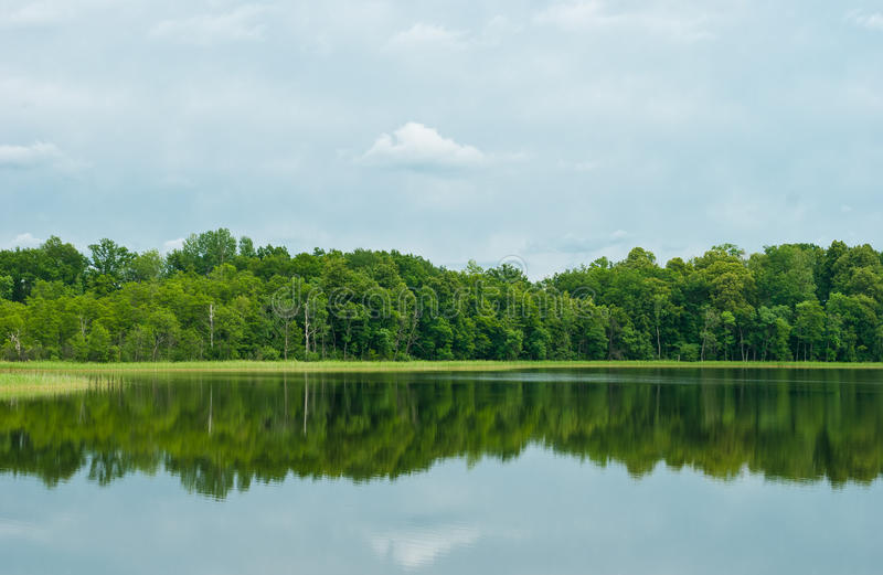 Bosque de hojas caducas reflejado en el lago fotos de archivo libres de regalías