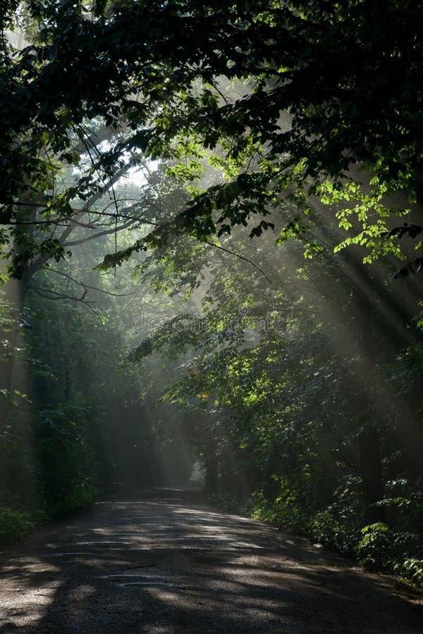 Bosque de hojas caducas viejo de tierra de la travesía de camino fotografía de archivo libre de regalías